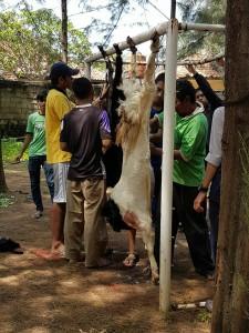 Mahasiswa Fakultas Kedokteran dan Ilmu Kesehatan (FKIK) turut merayakan Idul Adha dengan menyembelih hewan kurban di Lapangan Parkir, Senin (12/09). Kali ini, para mahasiswa menyembelih lima ekor kambing hasil sumbangan mahasiswa dan karyawan FKIK.