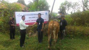 Tahun Ini, UIN Jakarta Potong 10 Ekor Hewan Kurban
