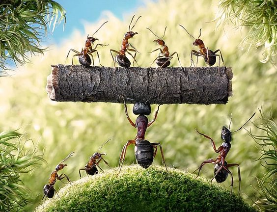 Semut Makhluk Luar Biasa