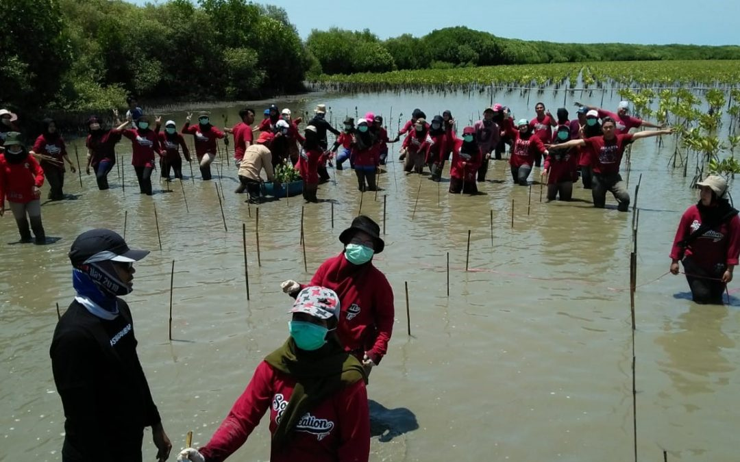 Mahasiswa Tadris IPS Peduli Mangrove